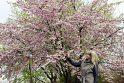 Pasigrožėti sakurų žiedais galima ir Klaipėdos universiteto Botanikos sode.