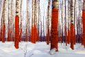 """Klaipėdoje viešės provokuojančio meno projekto """"Russian Red"""" autorius J.Vasiljevas"""
