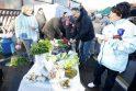 Pirmoji turgaus šventė sudomino palangiškius