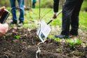 B. Galdikas į Lietuvą iš Indonezijos sugrįžo sodinti ąžuolų