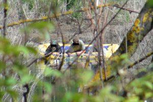 Rekordas: ankstų rytą Vilniaus regione įkliuvo net 6 brakonieriai
