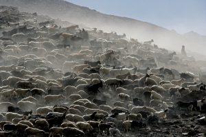 Kalnų didybė ir nepagražinta Vorkuta R. Puišio fotografijose