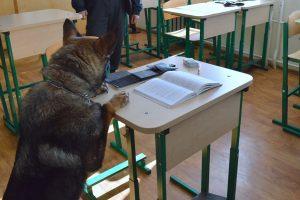 Tarnybinis šuo tarp moksleivio daiktų aptiko narkotikų