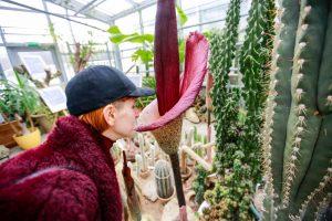 Ką žiemą galima pamatyti Botanikos sode?