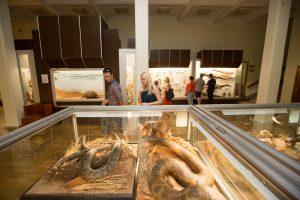 Muziejų naktis – proga paprastiems mirtingiesiems patekti į užkulisius