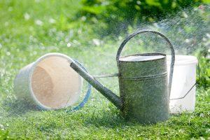 Dėl užmojo sureguliuoti sodininkų veiklą pasipylė nauji pasiūlymai