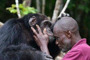 Konvencija suteikė papildomą apsaugą liūtams, šimpanzėms ir rykliams