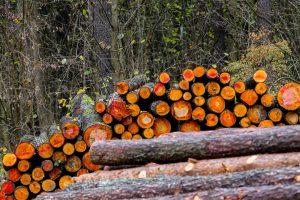 Senosios urėdijos užveria duris – darbą pradeda Valstybinių miškų urėdija