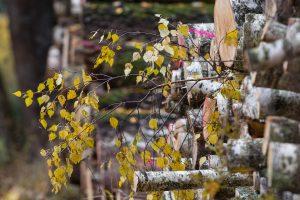 Mūšis dėl miškų pertvarkos įgauna naują pagreitį