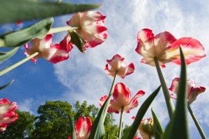 Sinoptikas: apie vasariškus orus kalbėti dar anksti