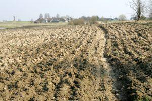 Seimas patikslino Žemės ūkio paskirties žemės įsigijimo įstatymą