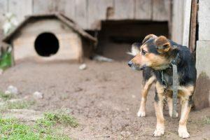 Žmonių žiaurumas: girtas alytiškis pakorė savo šunį