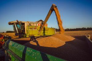 Ūkininkams už grūdus moka mažiau