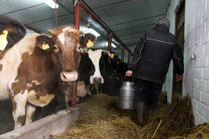 Strategija: iki 2030-ųjų – dvigubai didesni pieno gamybos mastai