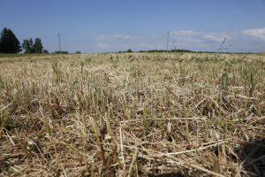 Dėl sausros skelbiama ekstremali situacija visoje šalyje