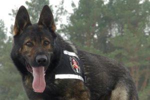 Pasieniečių šuo susekė dar vieną nelegalą