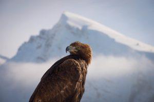 LRT eteryje – naujausia stulbinamo grožio BBC dokumentika apie gamtą