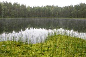 Cheminiu būdu Lietuvos ežerai valomi nebus