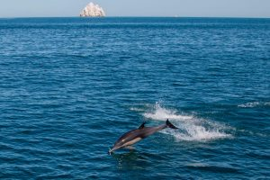 Mažiausiems pasaulyje delfinams gresia pavojus išnykti – jų liko apie 60
