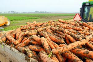 """Taivane sulaikytas 300 tonų morkų sukaupęs """"spekuliantas"""""""