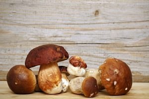 Kepurėlė – maistingiausia grybo dalis (receptai)