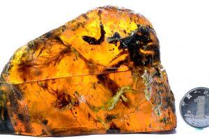Unikalus radinys: gintare įkalintas beveik 100 mln. metų senumo paukštis
