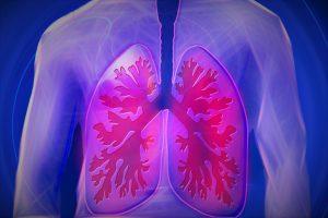 Plaučiai skirti ne tik kvėpavimui: atrasta dar viena jų funkcija