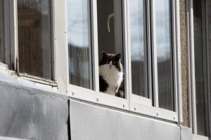 Aferistai uostamiestyje jau tikrina langus