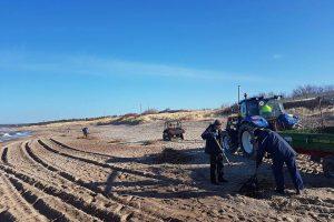Pliažuose renkamos nendrės – laukiama ir klaipėdiečių pagalbos