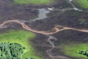 Tyrimas: šlapynės nyksta triskart sparčiau nei miškai