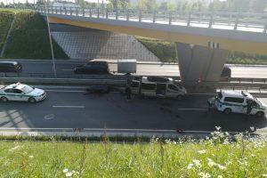 Vilniuje briedis sukėlė chaosą: gyvūnas nukrito nuo viaduko