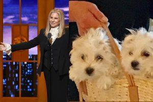 B. Streisand sako dukart klonavusi savo kalytę