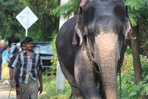 Keliautoja – apie šiaudelius banginių organuose ir kankinamus dramblius