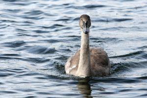 Gamtosaugininkai: žiemą ne visiems paukščiams reikia pagalbos