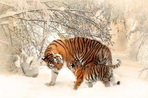 Spaudžiant šalčiams, zoologijos sodų gyvūnams – ne tik riebesnis maistas