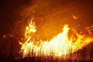 Estijoje didelis miško gaisras jau apėmė apie 200 hektarų
