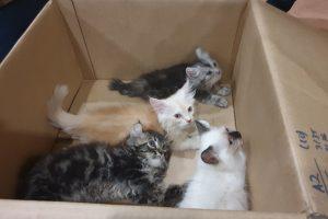 Netikėta kontrabanda: vyras keturis kačiukus mėgino pergabenti kelnėse