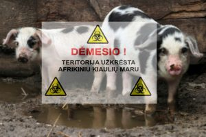 Atsisveikinimas su gyvuliais: už išskerstas kiaules – kompensacijos
