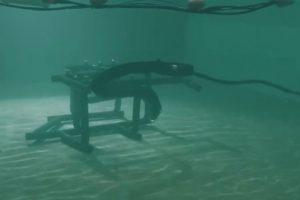 Gyvatės formos robotas tirs vandenyno užkaborius
