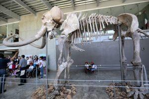 Moksliniai netikėtumai: mamutų skrodimas, o tada – klonavimas