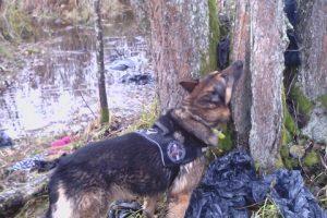 Į Lietuvą neteisėtai patekusį vietnamietį surado šuo