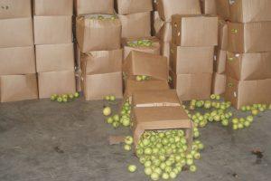 Į Lietuvą gabenamus rūkalus vairuotojas slėpė po rusiškais obuoliais