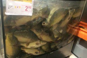 Dėl traumuojamų žuvų – sankcijos prekybos centrui