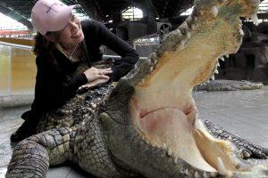 Asmenukę mėginusiai pasidaryti prancūzei įkando krokodilas