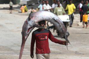 Viduržemio jūroje – nykstančių durklažuvių žvejybos kvotos