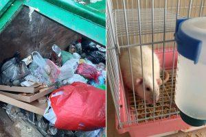 Žmonių žiaurumas: nereikalingą gyvūną tiesiog išmetė į konteinerį