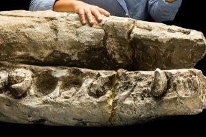 Senoviniai banginiai buvo grobuoniai, o ne taikūs milžinai