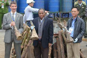 Į Vietnamą toliau keliauja dramblio kaulai: sulaikyta per 600 kg