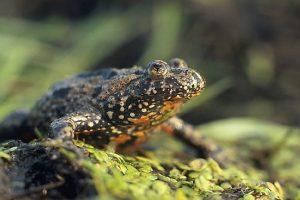 Lietuvos zoologijos sode – tik savaitę per metus pasirodantys gyvūnai