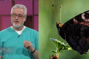 Skraidantys drugeliai pilve – tik klajoklis nervas, reaguojantis į stresą
